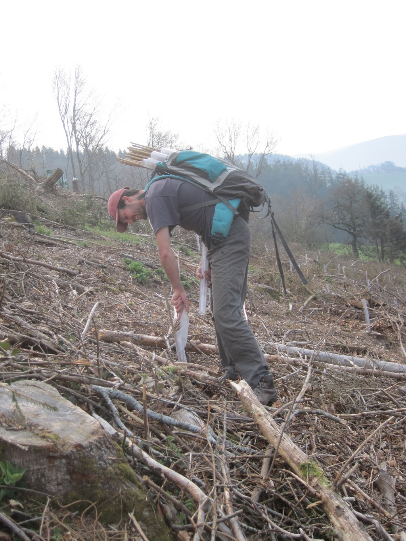 Castle Ring Oak Frame Tree planting Powys