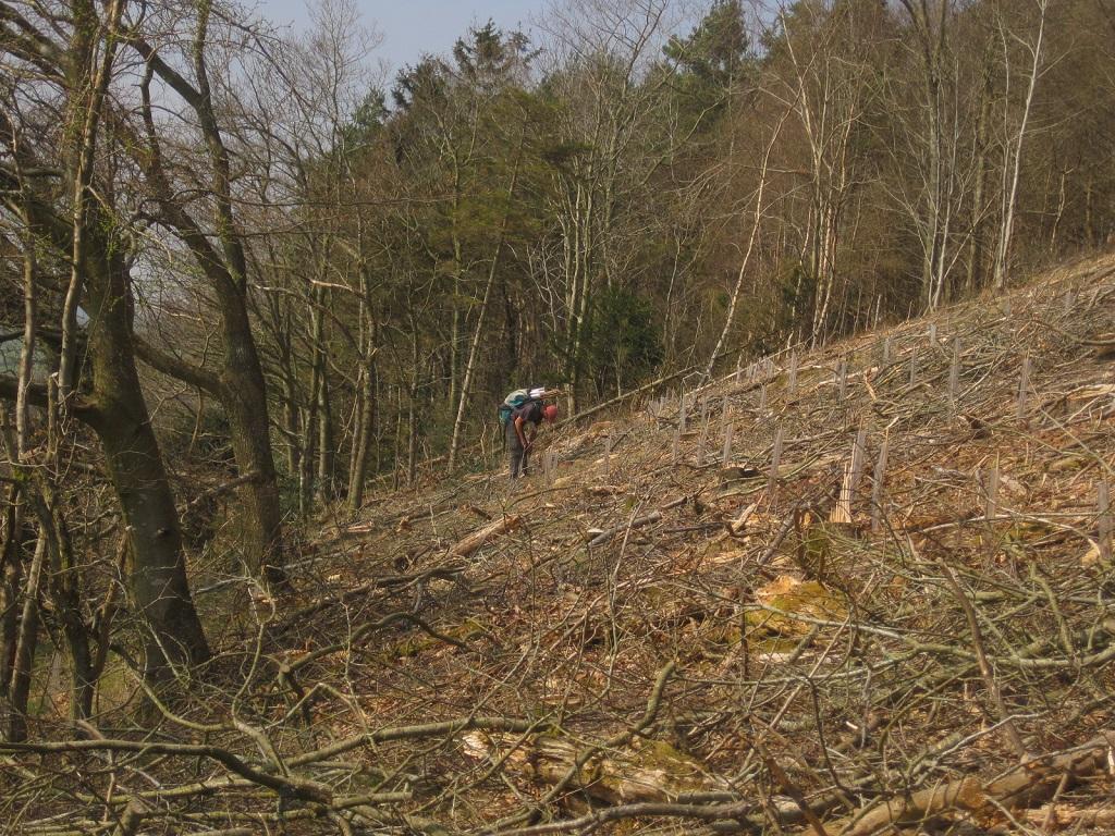 Woodland Management Powys Castle Ring