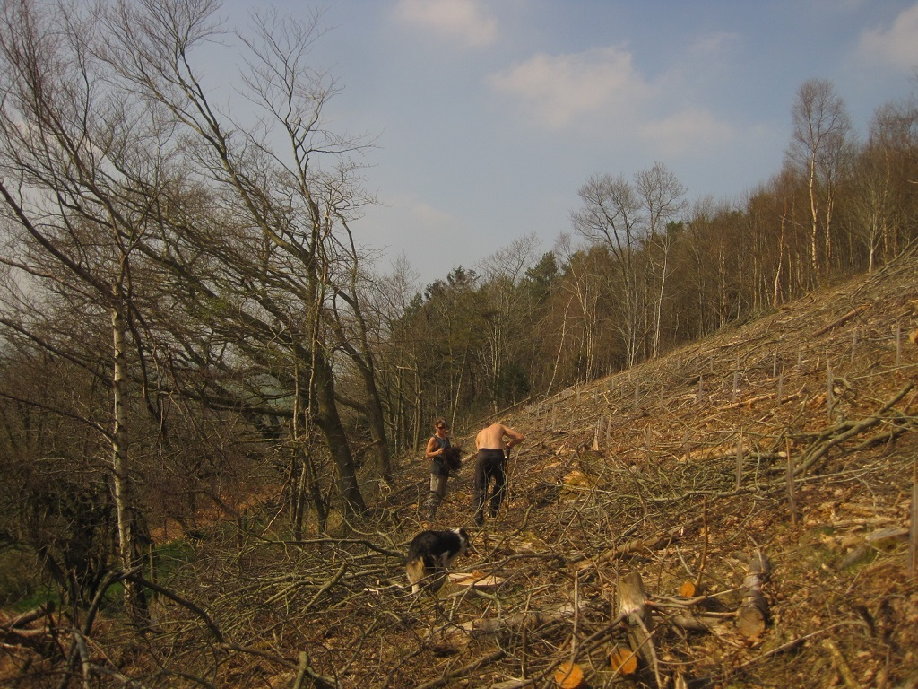 Planting saplings tree woodland